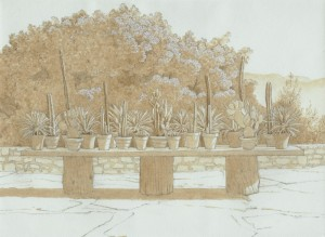 Cactus, Corfu